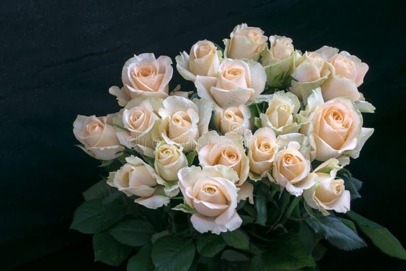 As rosas brancas Handbouquet com fundo e detalhe pretos do orvalho em rosas fazem as rosas olhar tão bonitas e majestosas imagens de stock royalty free