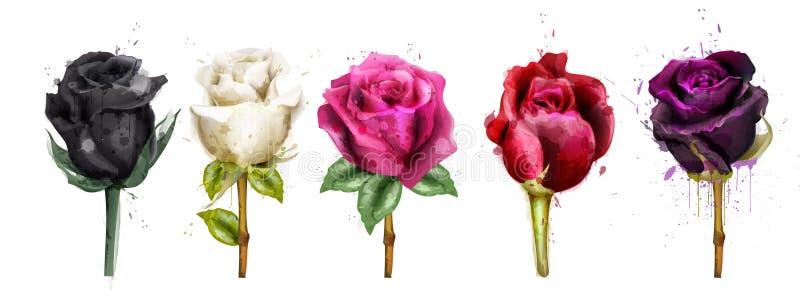 As rosas coloridas da aquarela ajustaram o vetor da coleção Rosa do preto, rosa, flores vermelhas Ilustrações florais detalhadas  ilustração do vetor
