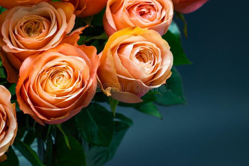 As rosas cor-de-rosa do pêssego fecham-se acima em um fundo floral do fundo escuro imagens de stock royalty free