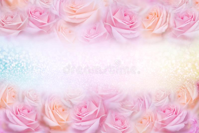 As rosas cor-de-rosa macias florescem o quadro com fundo do brilho e o espaço da cópia para o texto imagens de stock royalty free