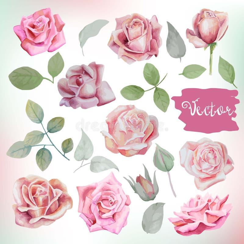 As rosas e as folhas grandes da aquarela ajustaram-se para ramalhetes, grinaldas, weddi ilustração stock
