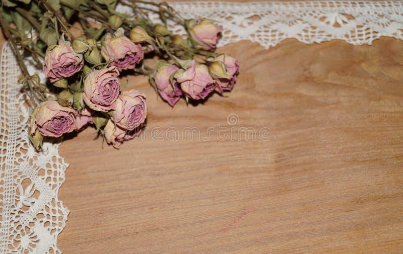 As rosas murcham e atam fotografia de stock royalty free