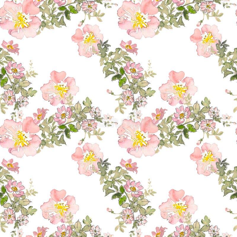 As rosas sem emenda do rosa selvagem do teste padrão florescem e esverdeiam as folhas Ilustração floral da aquarela Elemento deco imagens de stock royalty free