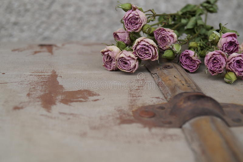 As rosas wither foto de stock royalty free