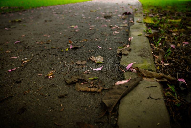 As ruas estão completas da grama e das flores imagens de stock
