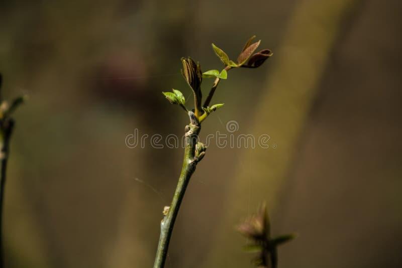 As ?rvores e as flores crescem em um jardim na primavera Bot?es verdes em ramos das folhas grupos Plantas da casa nave Fundo fotografia de stock