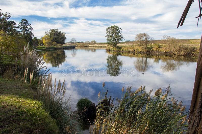 As ?rvores no banco de rio quequen grandioso fotos de stock royalty free