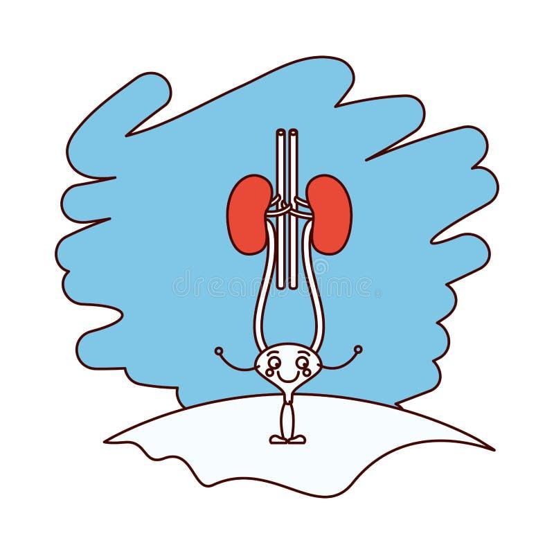 As seções da cor mostram em silhueta a cena na grama com sistema renal da caricatura da silhueta com uretra ilustração do vetor