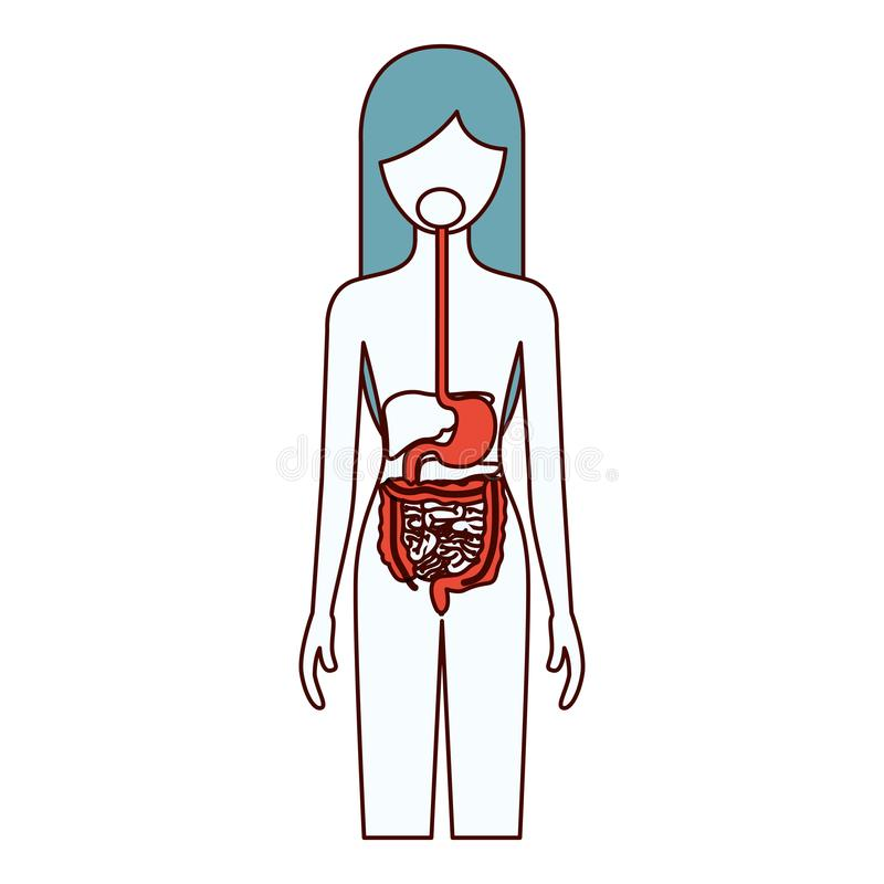 As seções da cor mostram em silhueta da pessoa fêmea com corpo humano de sistema digestivo ilustração do vetor