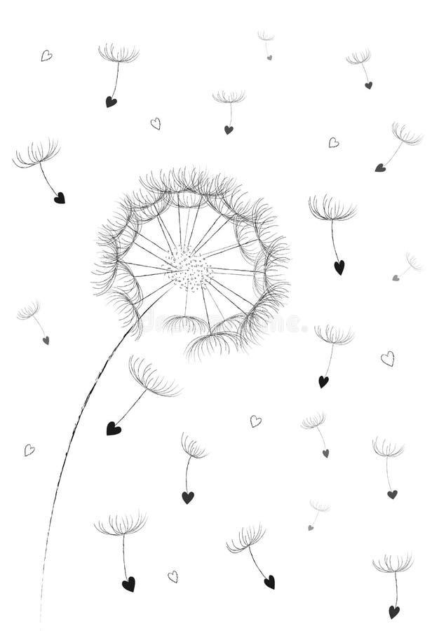 As sementes de flor do dente-de-leão em um coração dão forma ao flyingin que o ar se isolou no vertical branco do fundo, vetor ilustração stock