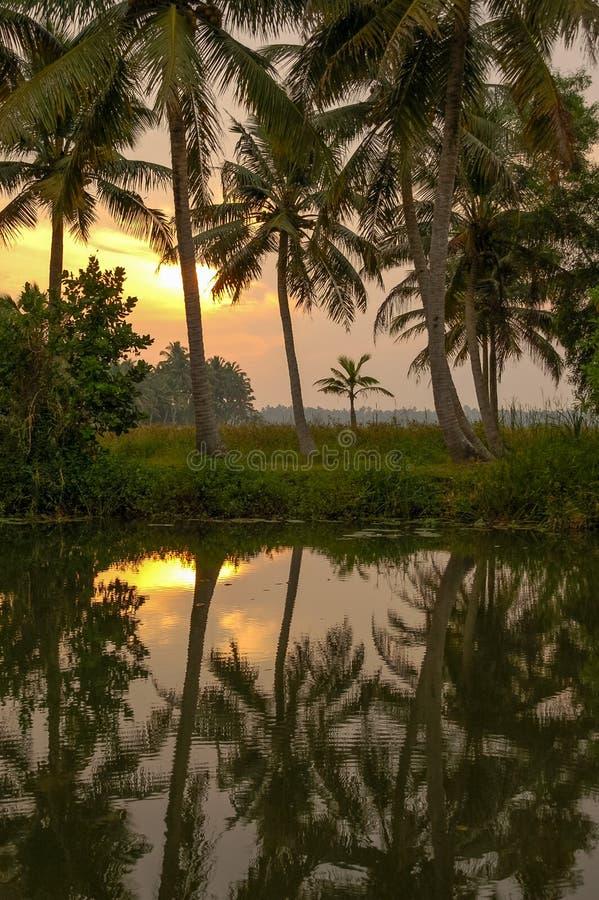 As silhuetas da palmeira refletiram na água no por do sol, Kerala, Indi imagem de stock