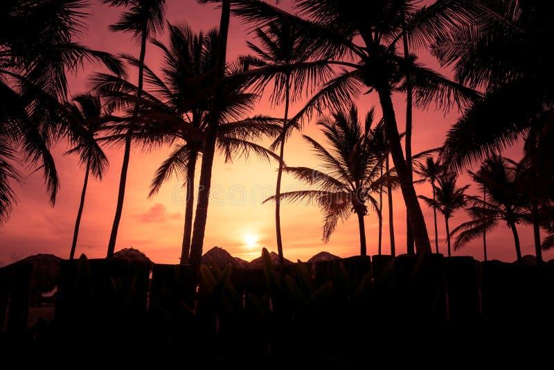 As silhuetas das palmeiras na praia tropical no verão aquecem o tempo vívido do por do sol fotografia de stock royalty free