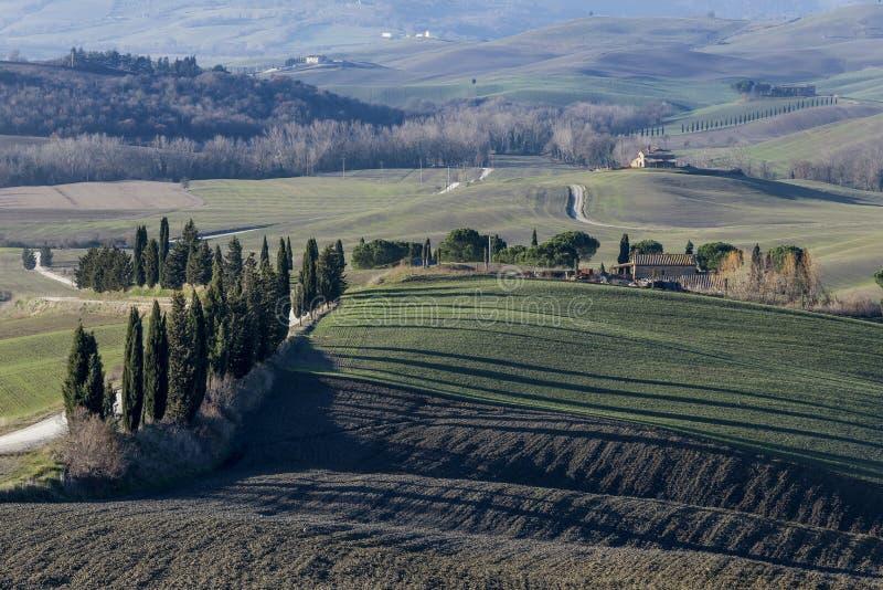 As sombras longas de árvores de cipreste nos campos do campo Tuscan na província de Siena, Toscânia, Itália foto de stock