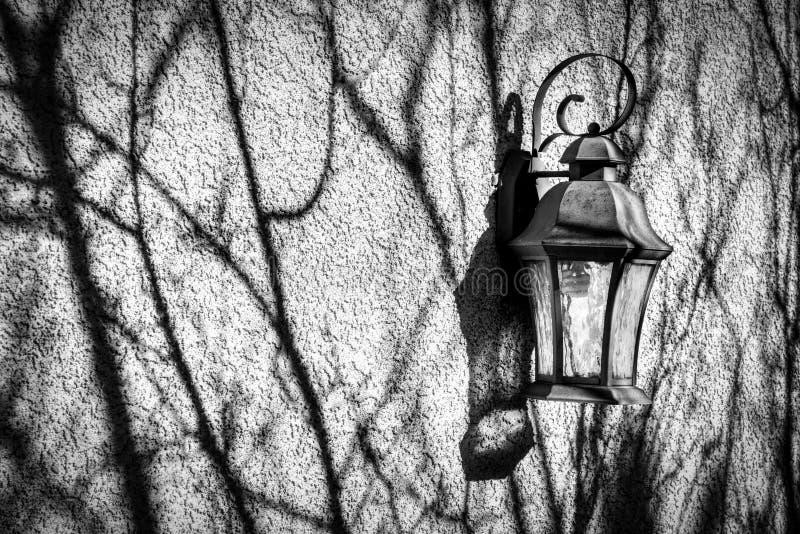 As sombras longas e temperamentais do ramo rastejam através de uma parede embebida sol com lanterna do vintage foto de stock royalty free