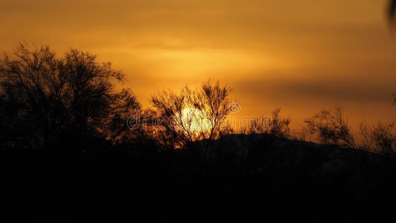 Fading In The Background. As the sun is setting behind the silhouette of the trees it's glory is slowly fading in the desert of phoeniy arizona taking by stock photo