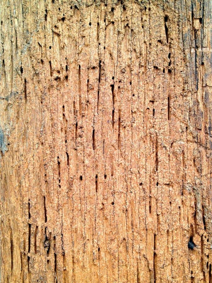 As térmitas comem a madeira foto de stock royalty free