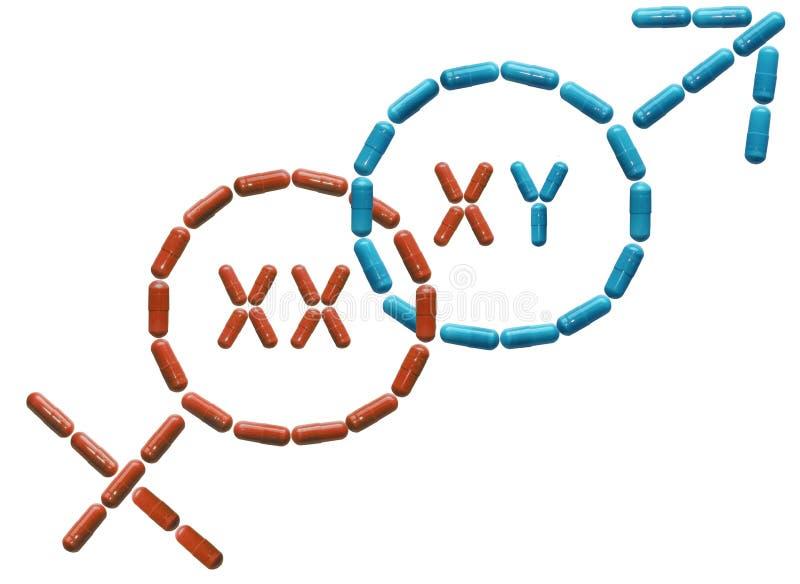 As tabuletas são alinhadas em uns símbolos fêmeas e masculinos com cromossomas Potência e ereção aumentadas Saúde humana Medicina fotografia de stock royalty free