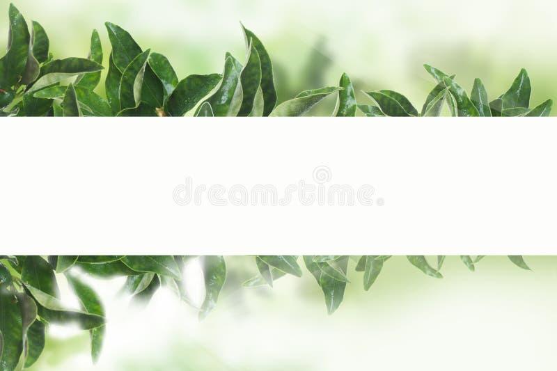 as tangerinas jardinam no backround verde com luz solar O mandarino sae com o Livro Branco ilustração royalty free