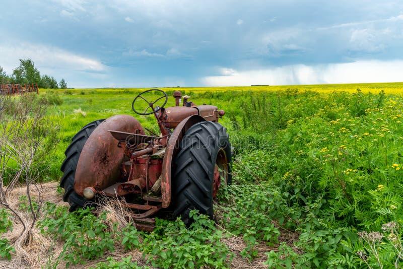 As tempestades da pradaria varrem sobre campos do canola fotografia de stock royalty free