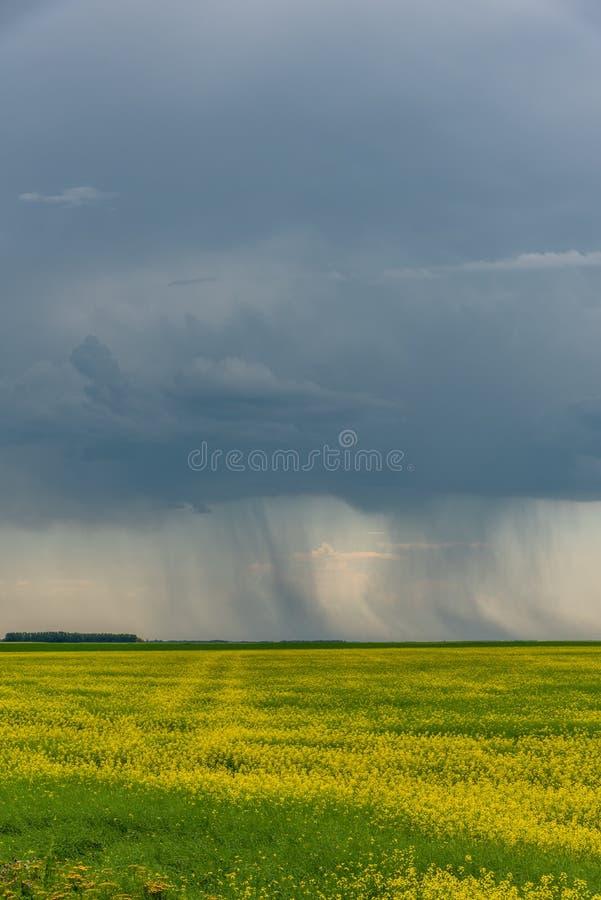 As tempestades da pradaria varrem sobre campos do canola fotos de stock