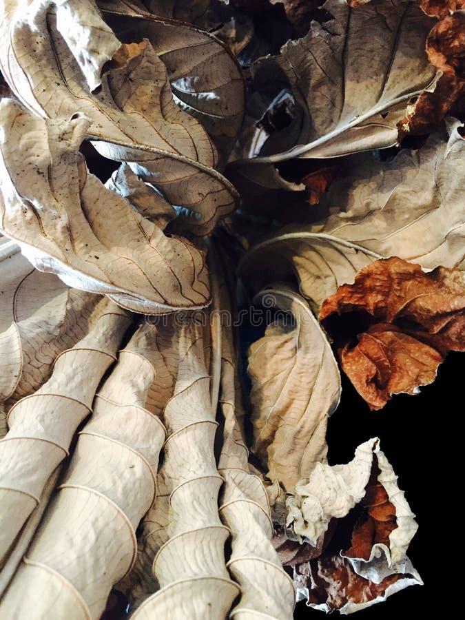 As texturas de um grupo secam a composição das folhas imagens de stock