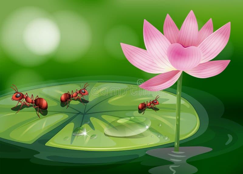 As três formigas acima waterlily da planta ilustração do vetor