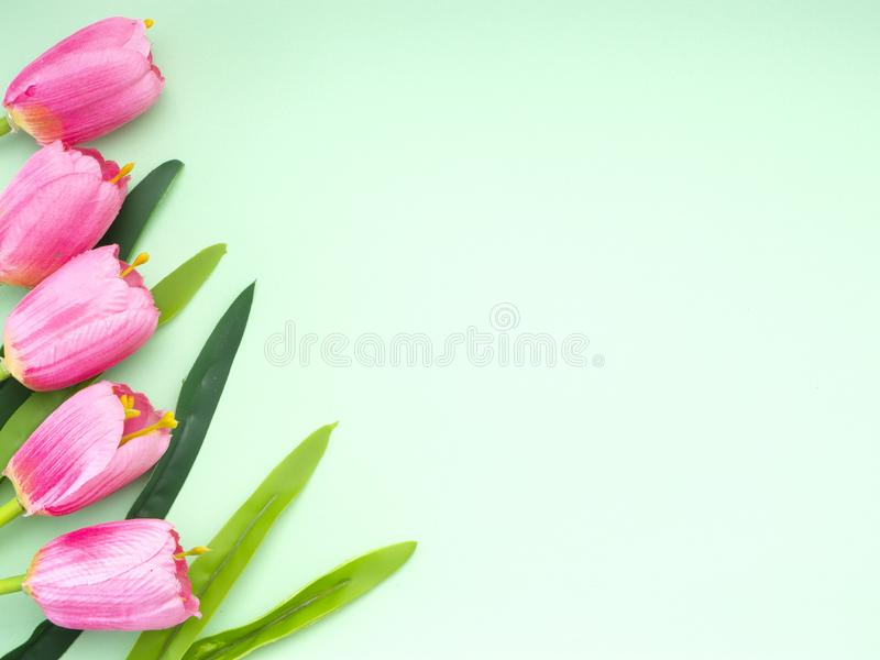 As tulipas cor-de-rosa esverdeiam o fundo do papel imagens de stock royalty free