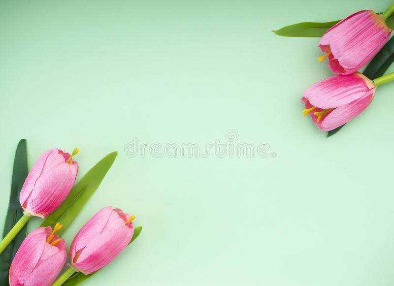 As tulipas cor-de-rosa esverdeiam o fundo do papel imagem de stock royalty free