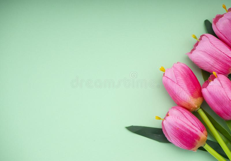 As tulipas cor-de-rosa esverdeiam o fundo do papel fotos de stock royalty free
