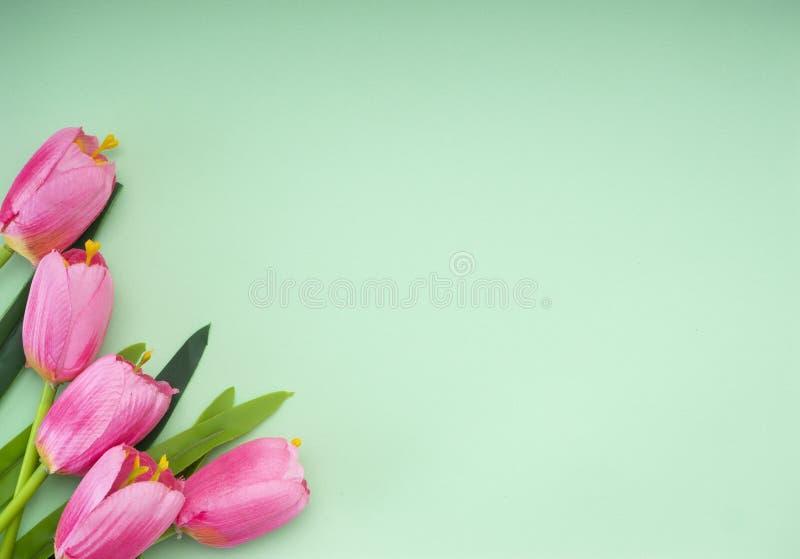 As tulipas cor-de-rosa esverdeiam o fundo do papel imagem de stock