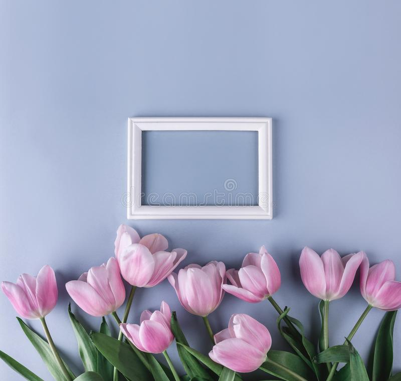 As tulipas cor-de-rosa florescem na luz - fundo azul com quadro para o texto Quadro ou fundo do dia de Valentim de Saint ano novo imagens de stock