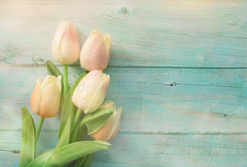 As tulipas do rosa da mola florescem no fundo de madeira da cor Tulipa, conceito de jardinagem Vista superior, espa?o da c?pia pa imagens de stock royalty free