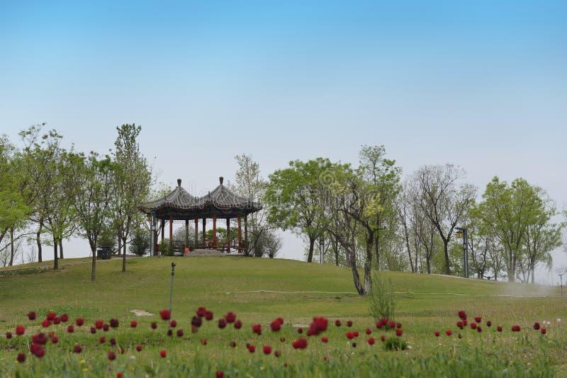 As tulipas e os pavilhões vermelhos ilustração royalty free