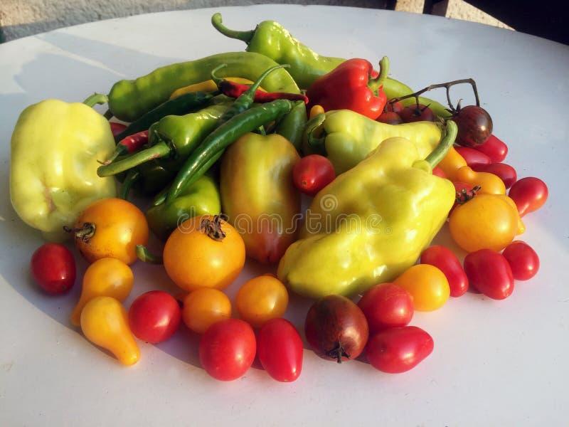As várias pimentas coloridos e os tomates incluíram vermelhos amarelos do greenand fotografia de stock