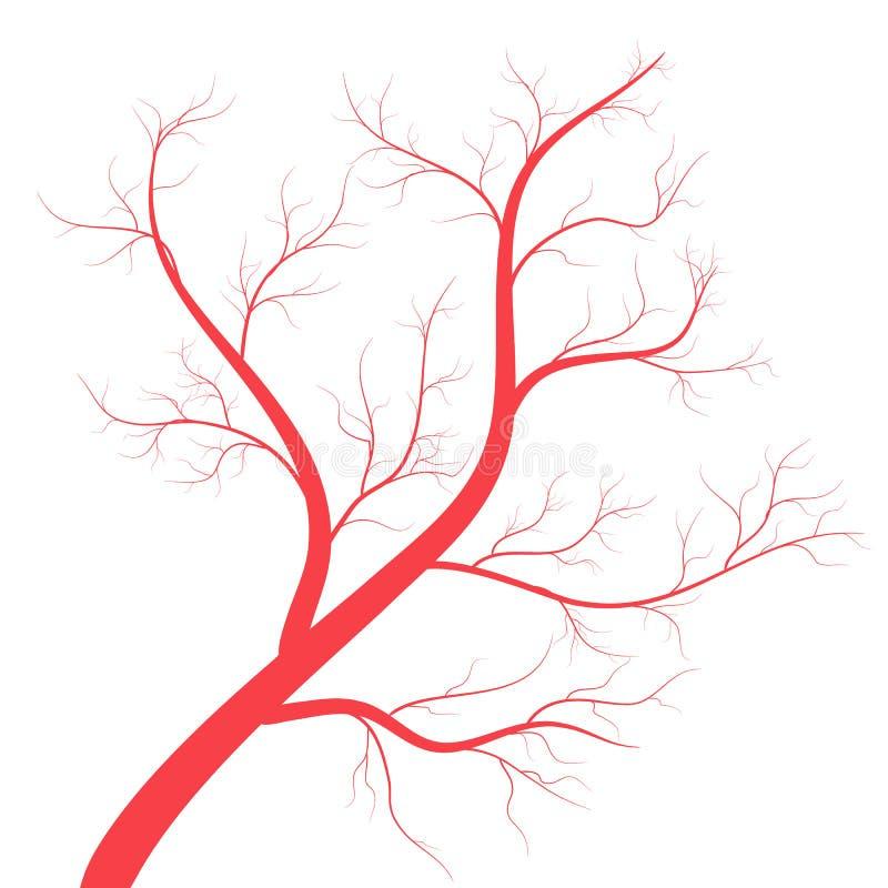 As veias humanas, vasos sangu?neos vermelhos projetam no backgroun branco Ilustra??o do vetor ilustração royalty free