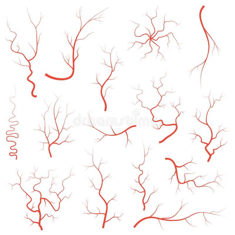 As veias vermelhas humanas do olho ajustaram-se, grupo da ilustração das artérias do vaso sanguíneo da anatomia Sistema médico da ilustração royalty free