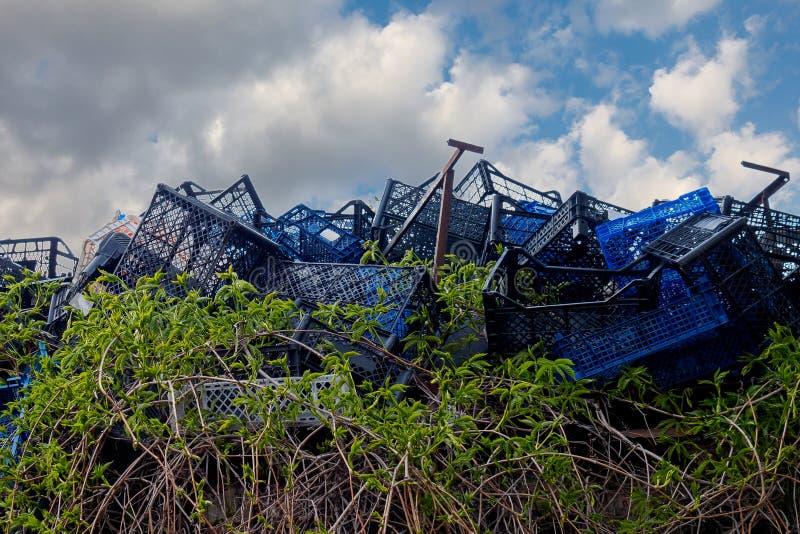 As videiras verdes crescem através das caixas plásticas azuis em uma operação de descarga contra um céu azul com nuvens O conceit imagens de stock