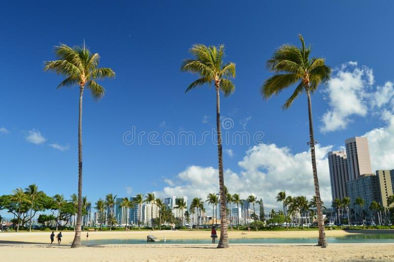 As vistas bonitas de Waikiki encalham com palmeiras impressionantes imagens de stock royalty free