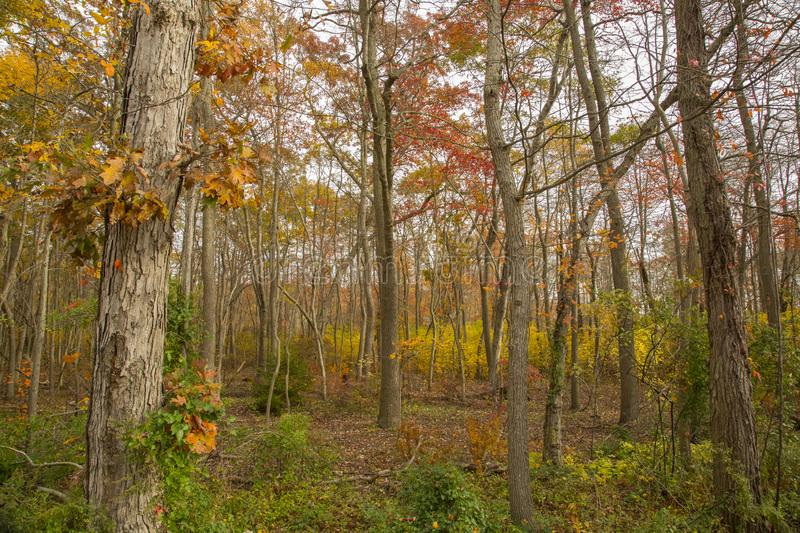 Fall in the Forest, Long Island, New York royalty free stock photo