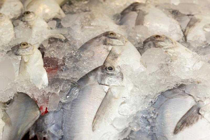 As xaputas frescas pescam no tanque do gelo no mercado do marisco fotografia de stock