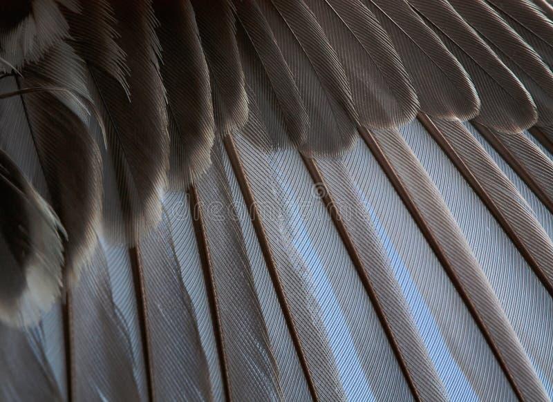 Download Asa imagem de stock. Imagem de closeup, azul, efeito - 16868489