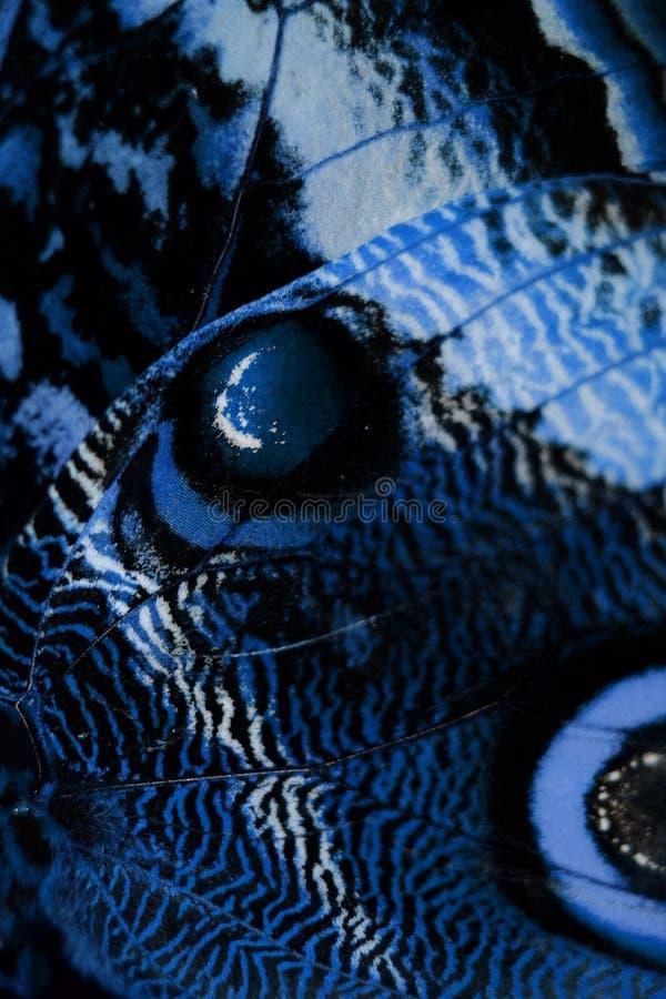 Asa azul da borboleta fotografia de stock royalty free