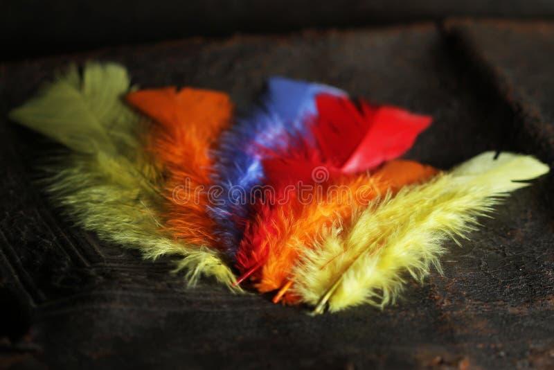 Asa colorida da pena, cores vívidas imagens de stock