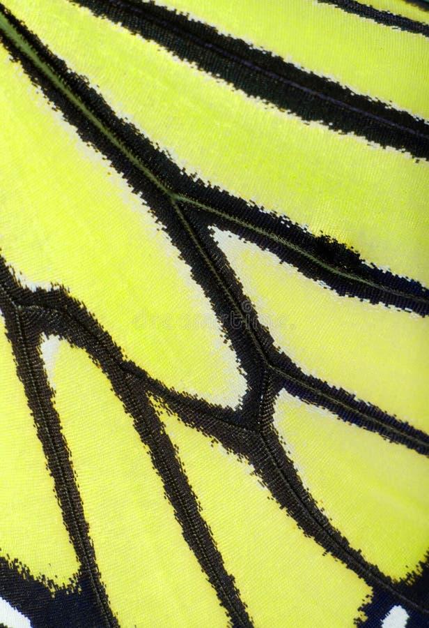 Asa da borboleta no amarelo de néon fotografia de stock royalty free