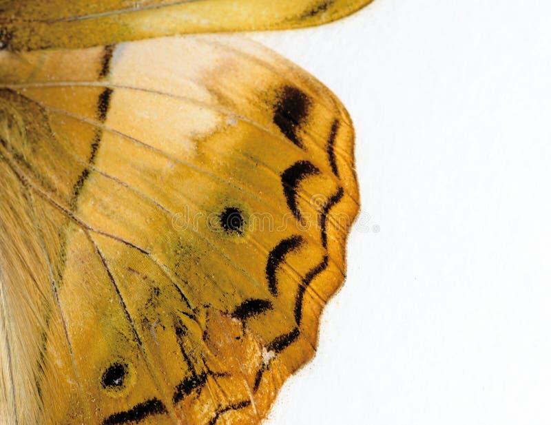 Asa da borboleta no close up macro imagem de stock