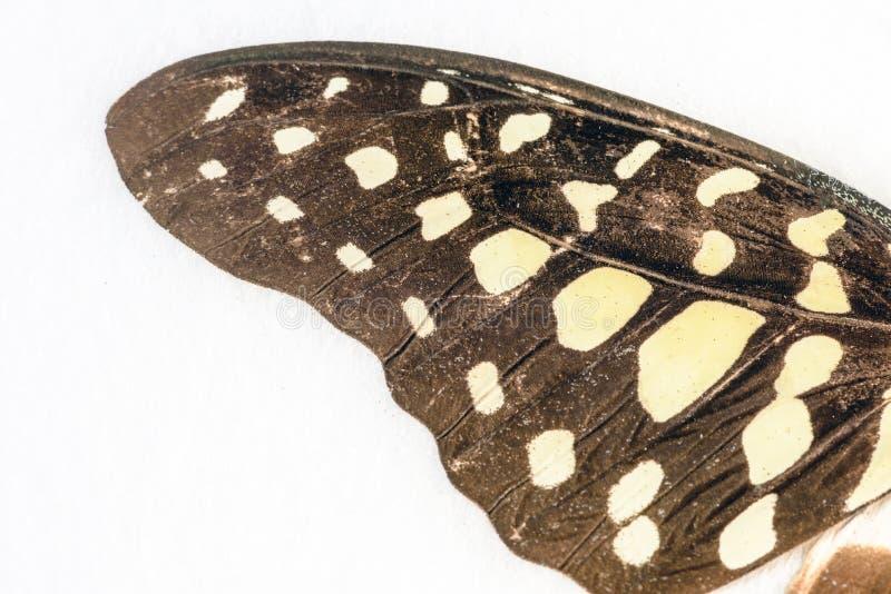 Asa da borboleta no close up macro fotos de stock royalty free