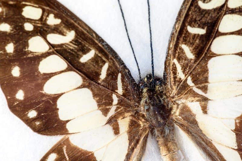 Asa da borboleta no close up macro foto de stock royalty free