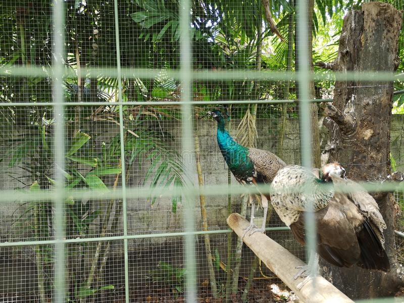 Asa do ‹de Animal†do ‹de Tropical†foto de stock