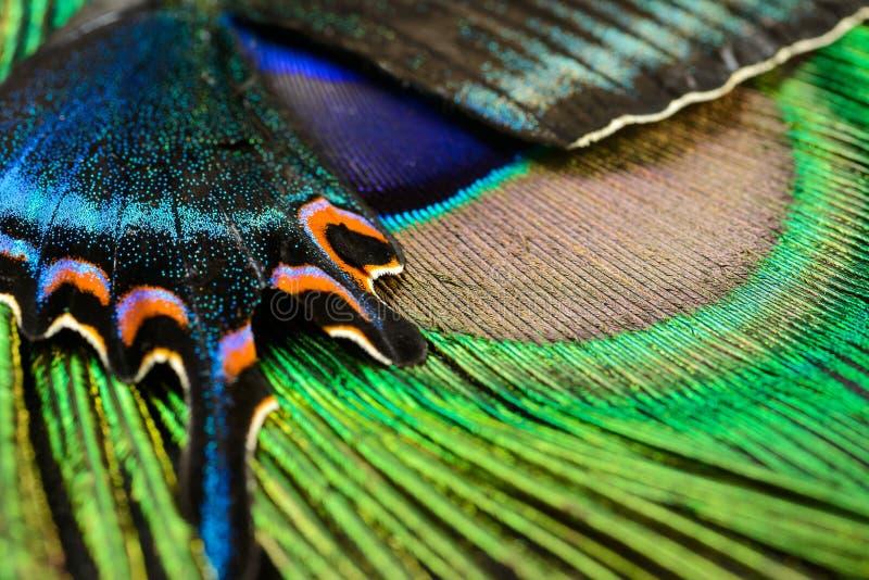Asa e pena da borboleta fotografia de stock