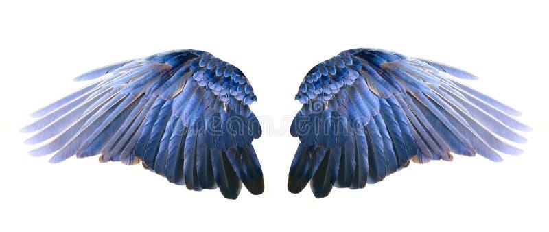 Asas azuis foto de stock royalty free